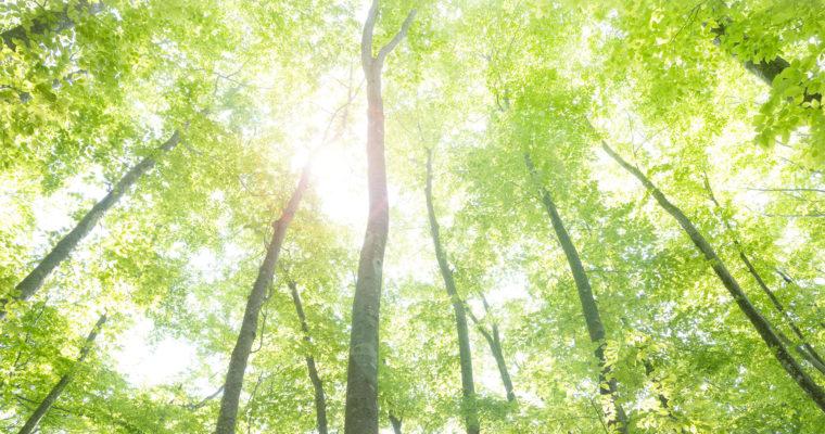 【終了】ワークショップ 「メディテーションforピラティス」12/23(土・祝)
